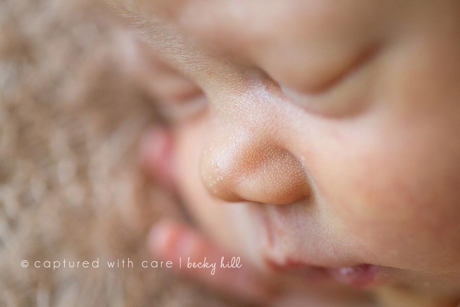 cute button nose macro photo